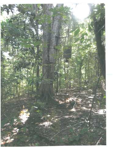 679.10 ACRES OCMULGEE RIVER, KATHLEEN, GA 31047