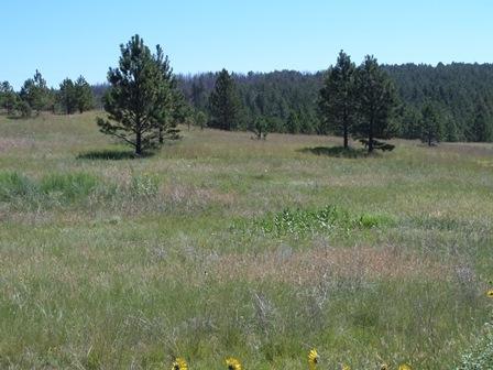 TBD Lot 9 Custer Highlands