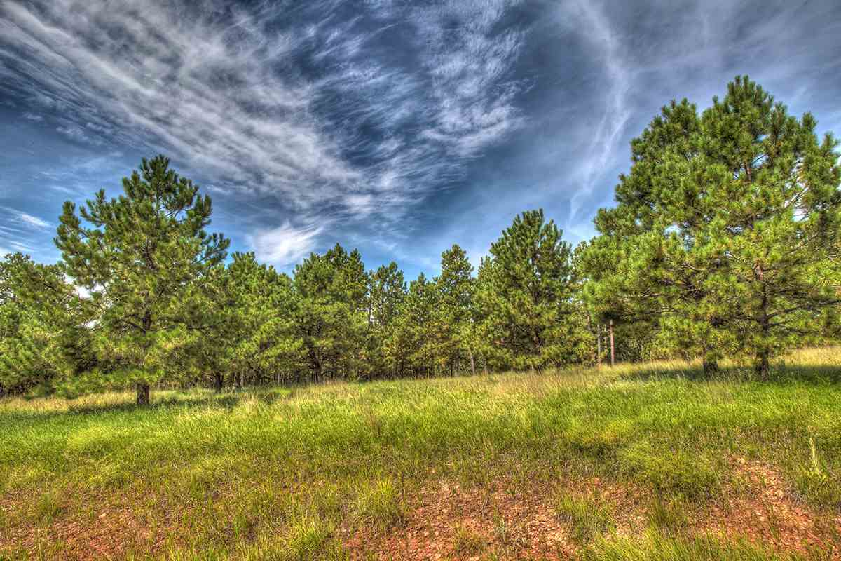 TBD Martin Ranch Trail