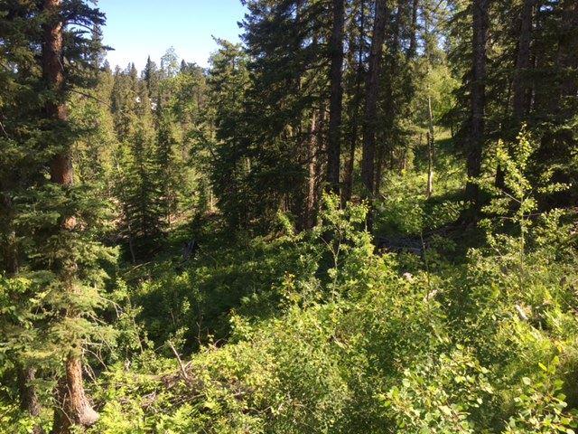 TBD 21 Lost Camp Trail