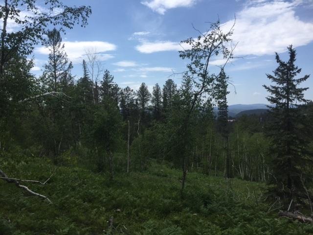 TBD 24 Lost Camp Trail