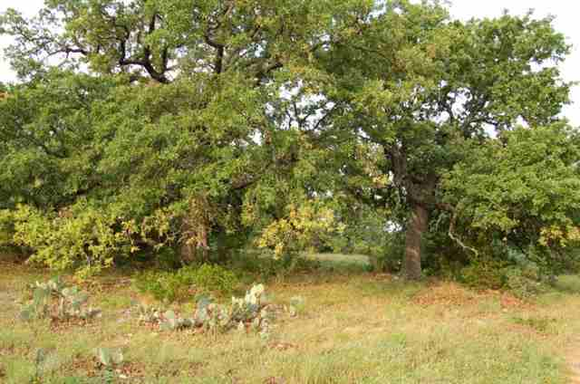 Additional photo for property listing at Lot 2 Foxwood Trail  Marble Falls, Texas 78657 Estados Unidos
