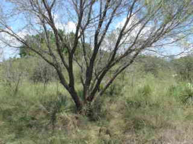 Additional photo for property listing at Sun Ray  Horseshoe Bay, Texas 78657 Estados Unidos