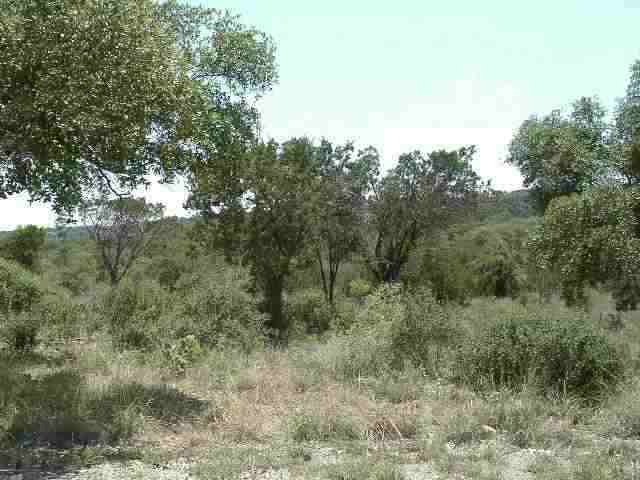 Additional photo for property listing at Lot 39 Knights Row  Cottonwood Shores, Texas 78657 Estados Unidos