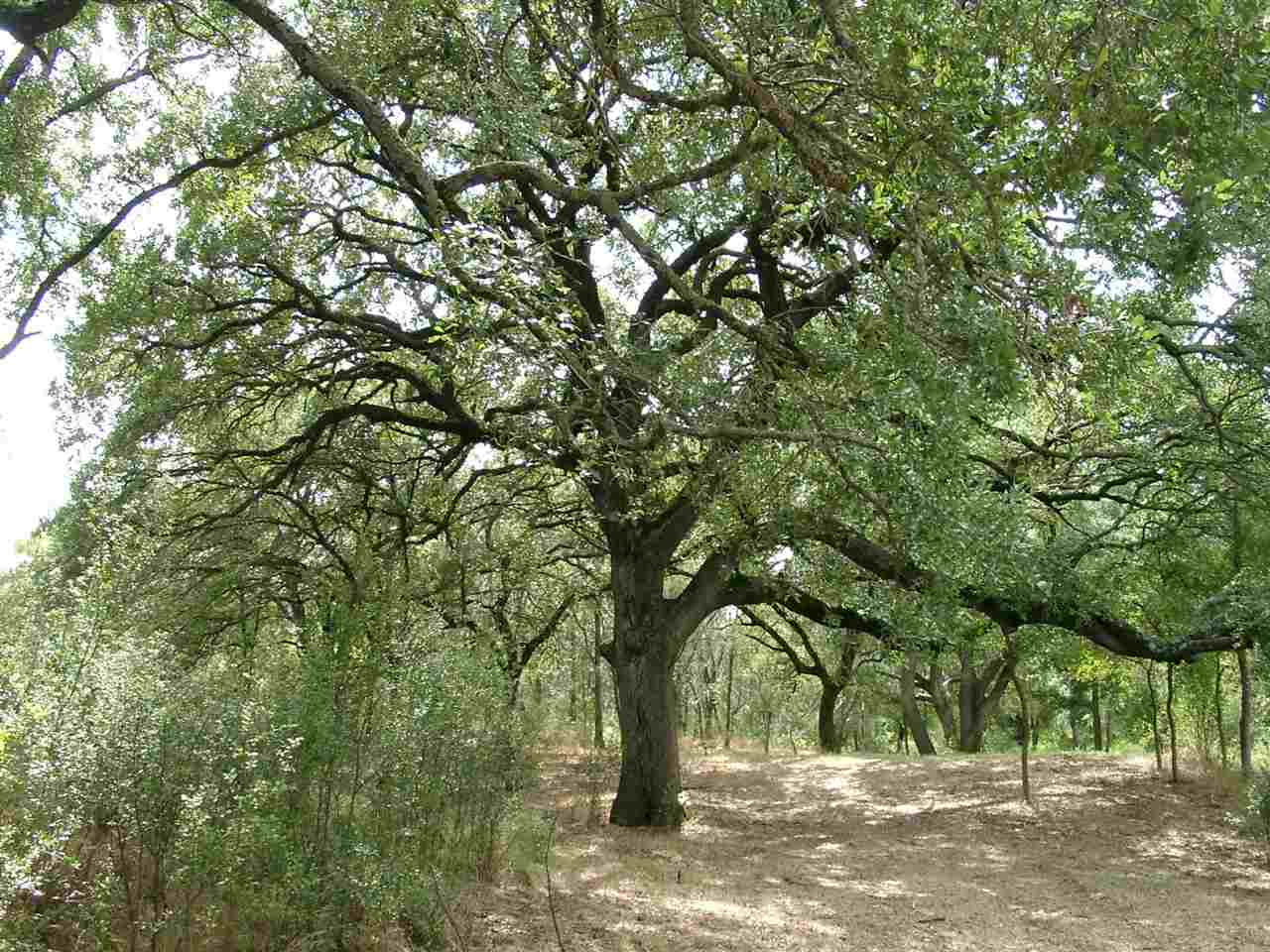 Land for Sale at 797 Glendale Road Spicewood, Texas 78654 United States