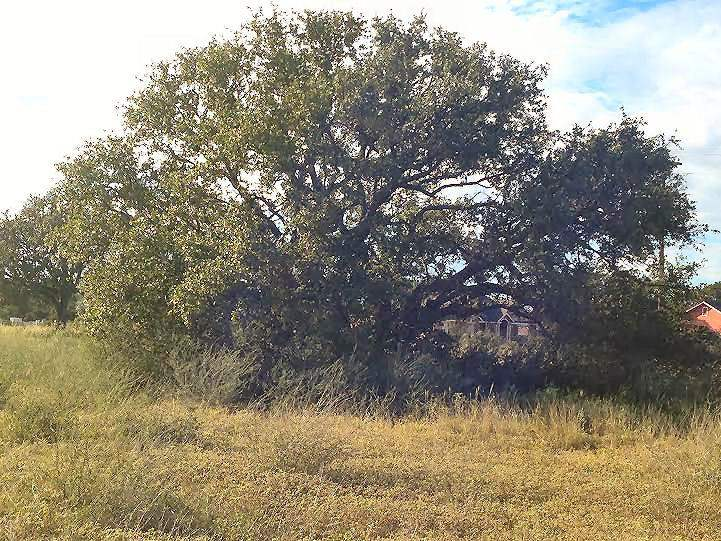 Additional photo for property listing at 1322 Quarter Horse Circle  Kingsland, Texas 78639 Estados Unidos