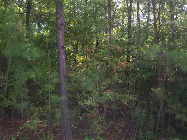 Lot113 BLUEGILL ROAD, Eatonton, GA 31024