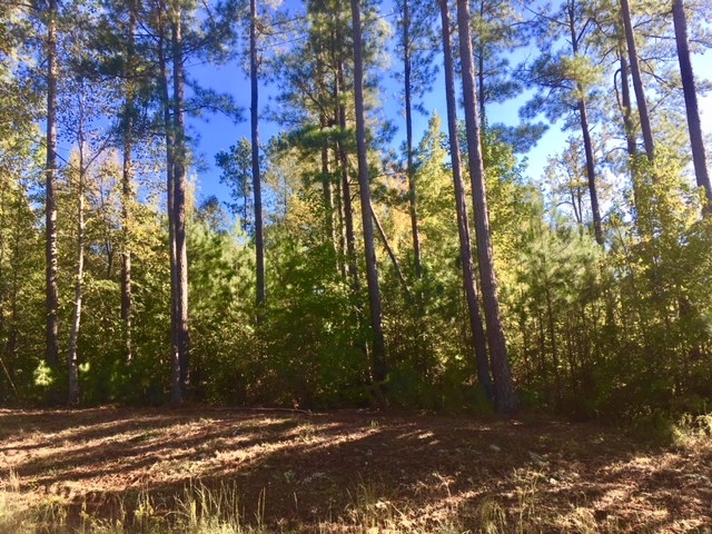 Lot 18 ANCHOR POINTE DRIVE AS, Lake Sinclair in Putnam County, GA 31024 Home for Sale