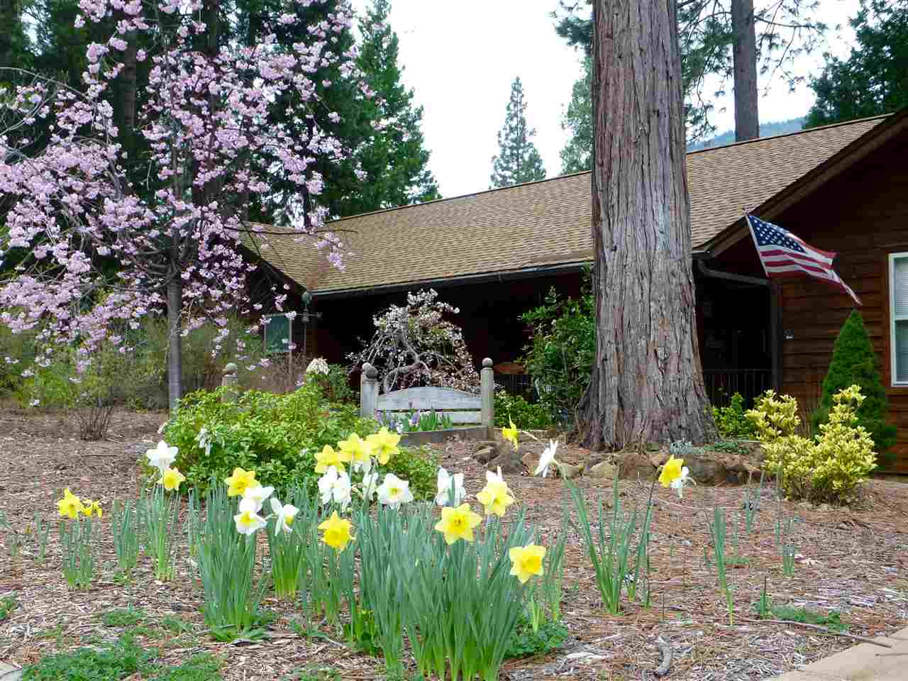 Mountain home nestled in the big trees……If you are ready for a mountain life style, this 1860 sf 3 bed/2 bath home is located minutes from Mt. Shasta, Sacramento River, championship golf course and board and ski park.  This well-appointed home features luxury plank vinyl flooring, natural river rock fireplace, and granite hearth, open floor plan with knotty pine ceiling. The large kitchen offers special lighting,  lots of storage and separate pantry. This home also sports a 600 sf unfinished basement, oversized garage and is wired for a generator. This alpine home is fabulous for indoor and outdoor entertaining with low maintenance landscaping and a variety of trees and privacy.