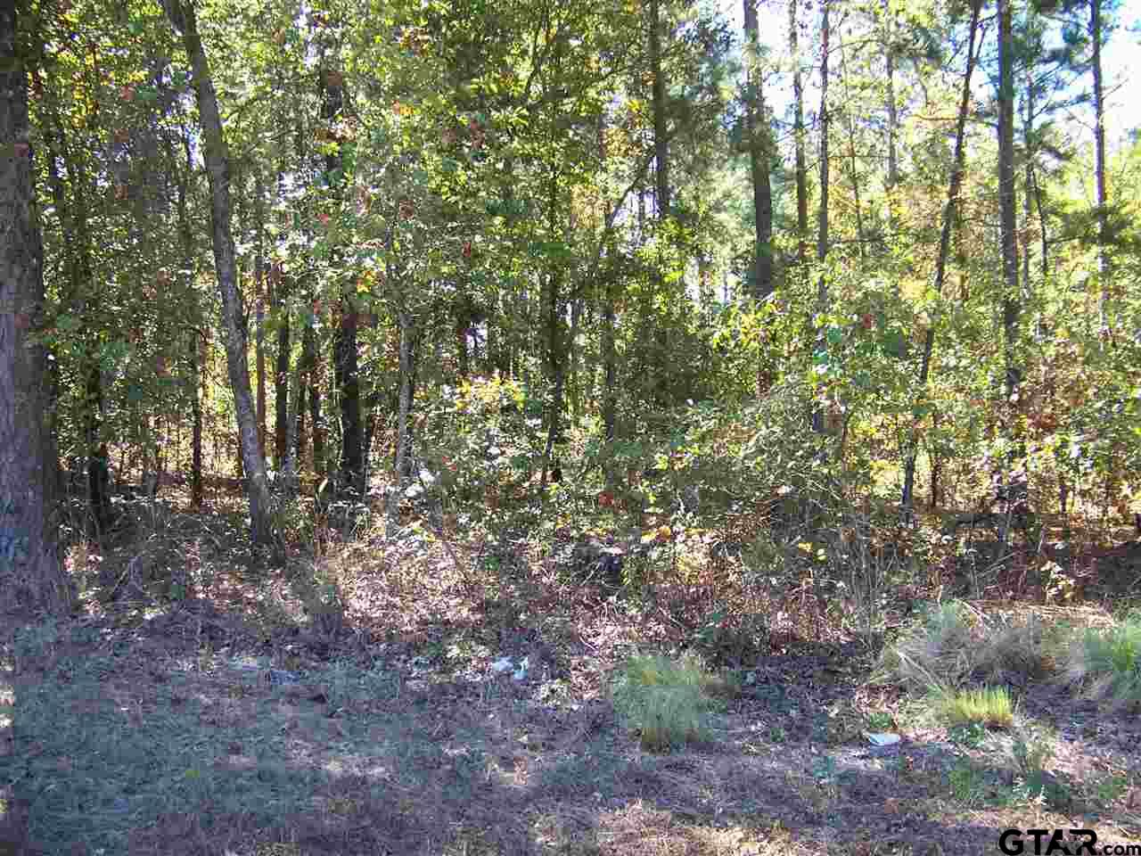 Tract 4 Big Woods Springs, Winnsboro, TX 75494
