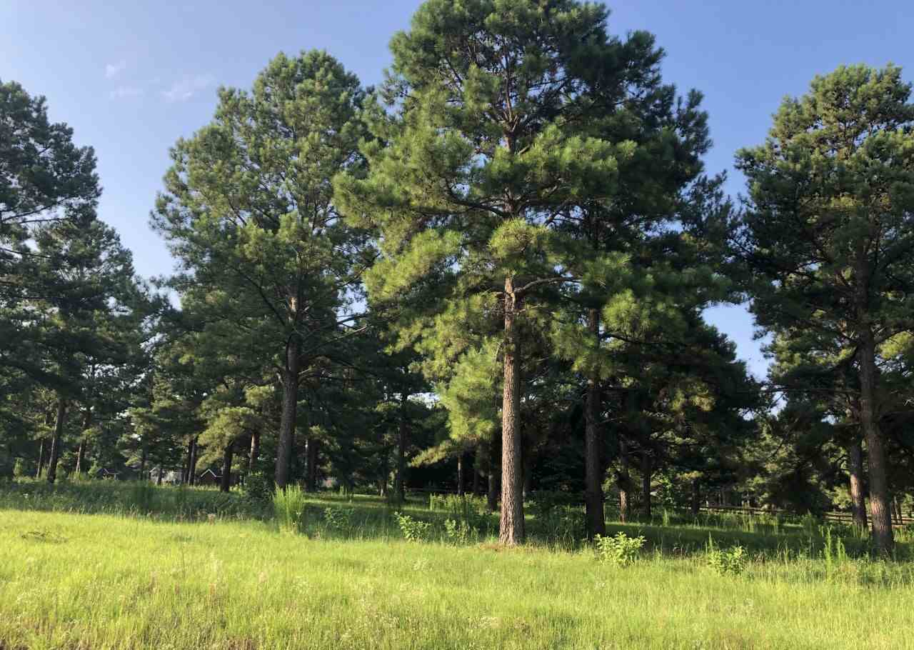 Lot 14 Worthington Circle , Fort Valley, GA 31030