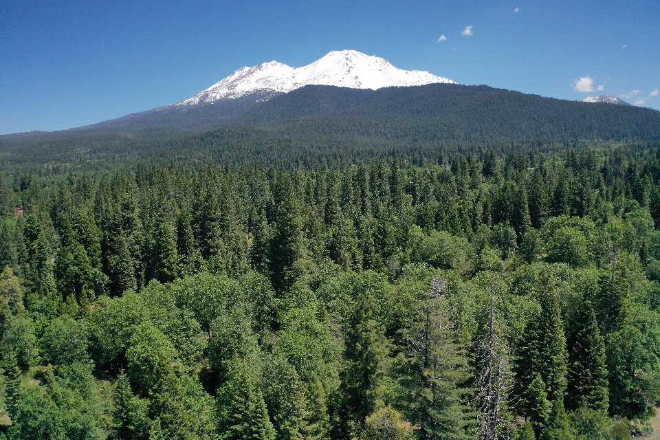 Pristine 2.9 acre parcel in the highly sought after Quail Hill Subdivision. Enjoy the best of both worlds with this amazing location! The feeling of privacy and forest elegance with the convenience of being centrally located. Just a few short blocks to downtown, parks, schools, and recreation of all kinds. Stunning Mount Shasta and Eddie Views on this beautiful parcel, boasting  gorgeous Oaks, Firs, Dogwoods and Shasta Daisys. The land lends itself to several building site options as well as a future fish pond which utilizes the natural drainage easement for the property. This prestigious neighborhood features paved roads, one prepaid city water hookup, underground utilities, snow removal and other amenities through the property owners association. Come and see this great opportunity for your next dream home!