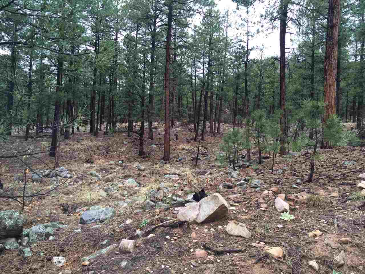 12.29 Acres Trumble Canyon Mora, NM 87732-0210