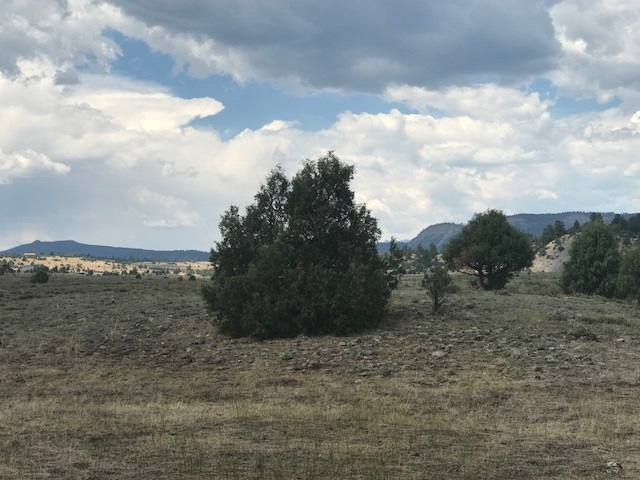 Tr N-3 Willow Way Chama, NM 87520