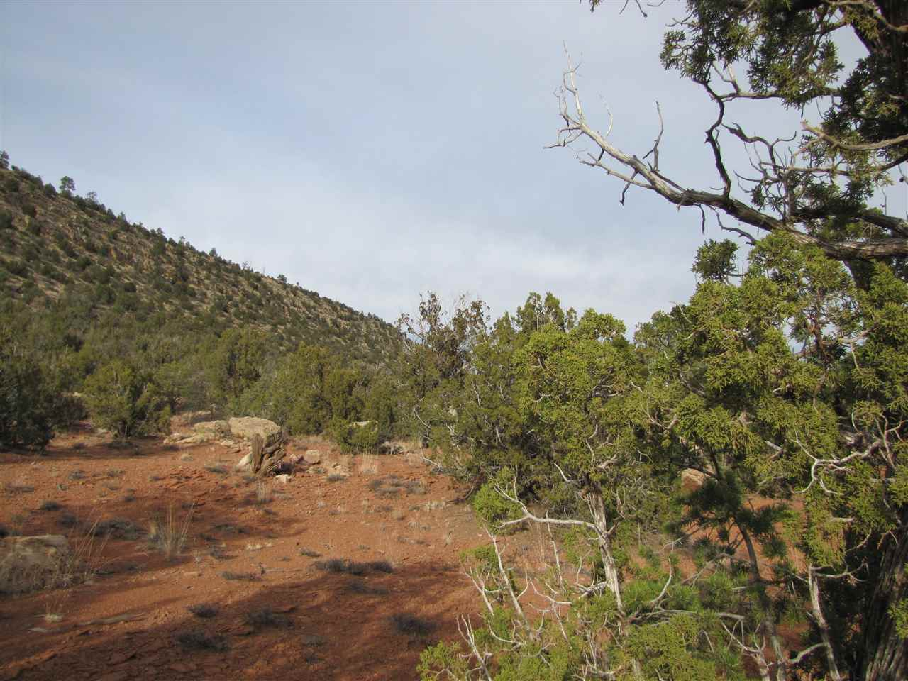Tracts 6A1&6A2 SMCR B31A Gonzales Ranch Ribera, NM 87560