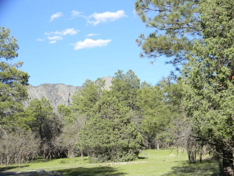 Lot 61 Pd 1753 Millstone Acres Chama Nm 87520 Sotheby