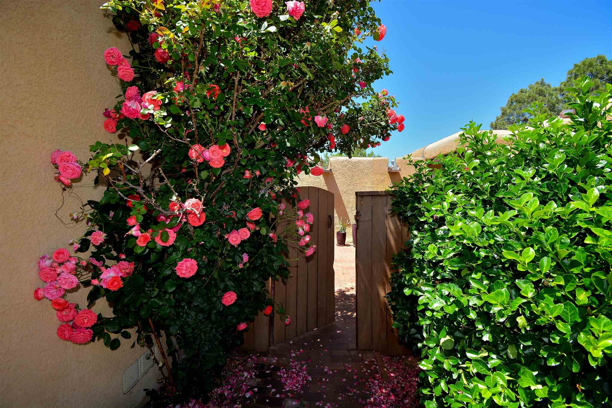 This darling townhouse in the coveted Park Plazas neighborhood has a cozy charm. From the spectacular rose bush covered entrance, to the dramatic corner kiva fireplace, this home is cute!  There are two bedrooms and an added sunroom/office that opens to the back patio with a colorful awning. Seller has added an extra high wall around the back yard for peace and privacy. The carpet is newer and the home has been lovingly maintained. Centrally located in Santa Fe, Park Plazas is a verdant oasis with miles of walking trails, a community garden, state-of-the-art tennis and pickleball courts, off-leash dog park and basketball and children's play areas. Don't miss this great home!